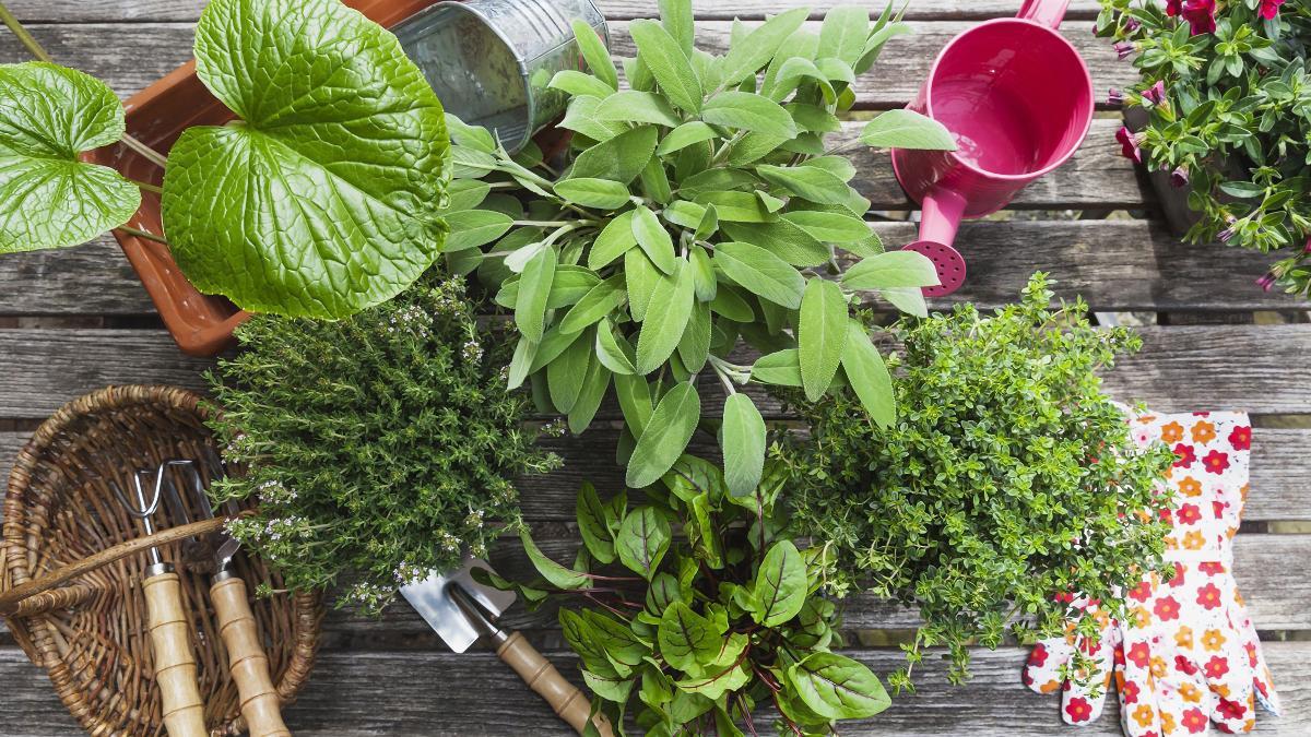 Plantes Aromatiques Sur Terrasse créer un jardin d'herbes aromatiques : conseils pour la