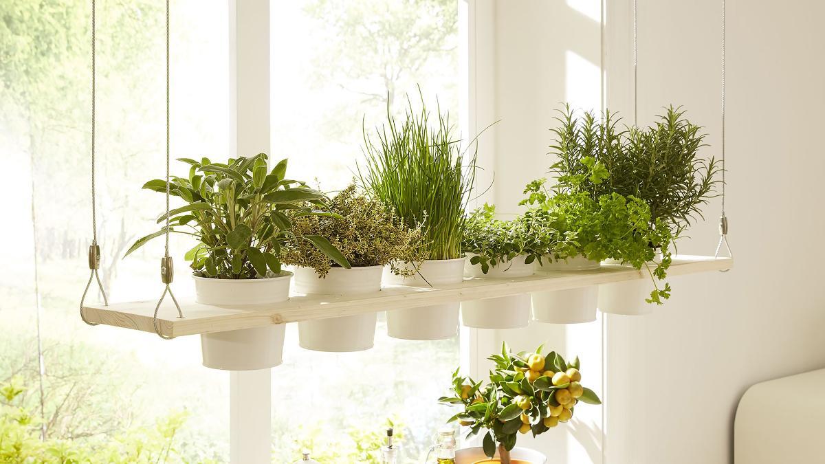 Kräuterregal selbst bauen: Es grünt so grün in deiner Küche