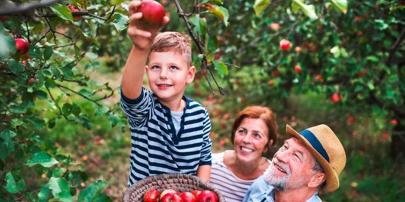 Wann Apfelernte